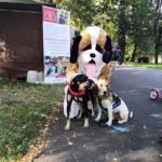 Drago a Venoušek jsou k adopci